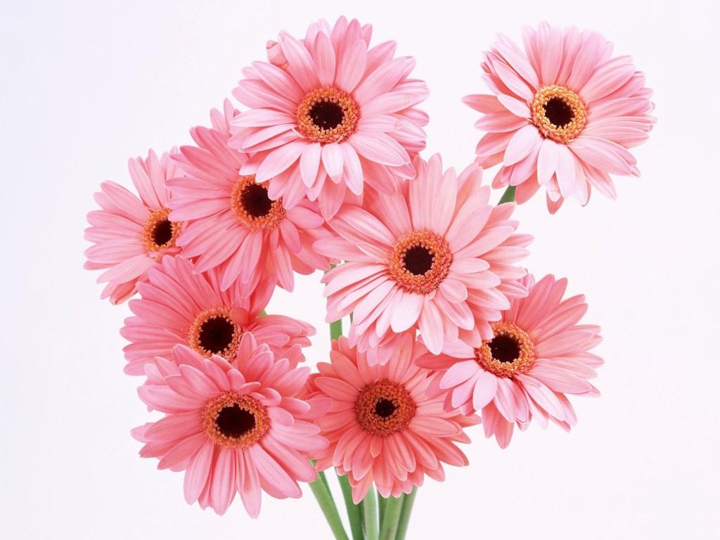Цветы для любимой